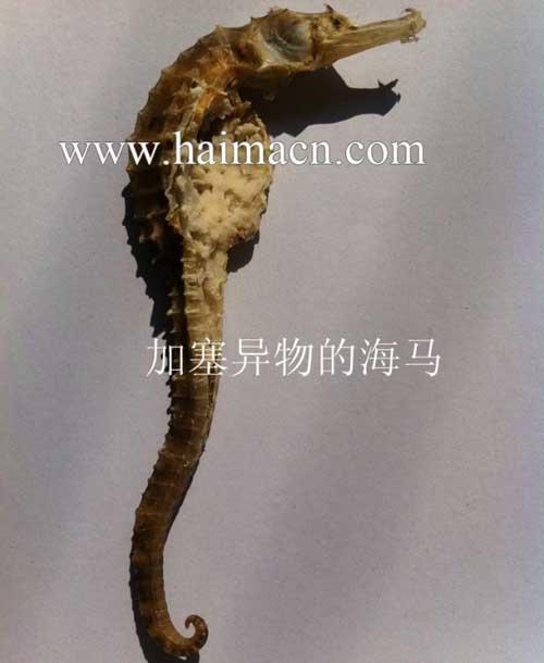 加塞异物的海马